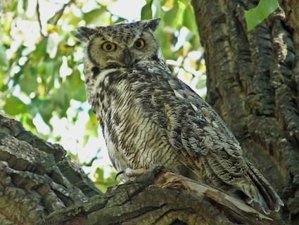 Owl-Photo-2