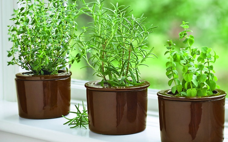 8920-herbs-on-windowsill