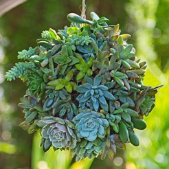 hanging-succulents-planter-ball-102285741-hero