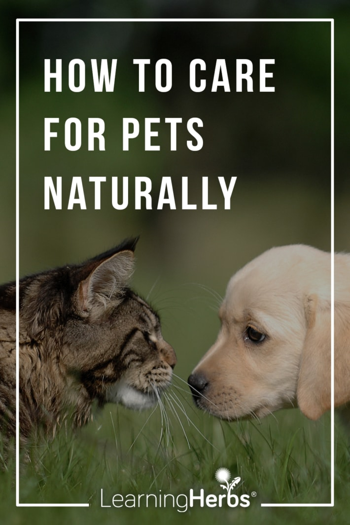 herbal-care-pets-710x1065