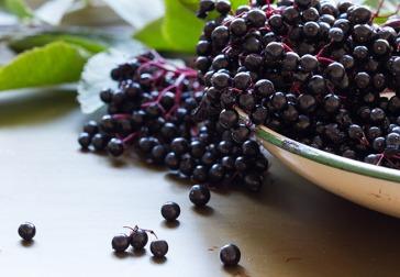 Elderberry-491243226